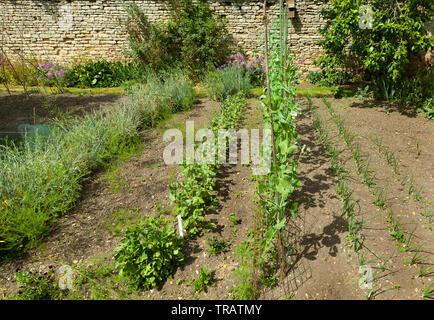 Vegetable garden plot - Stock Image