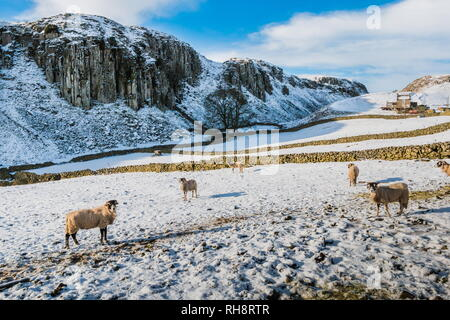 North Pennines AONB landscape. The dramatic Holwick Scar, part of the Whin Sill, Teesdale, in snow - Stock Image