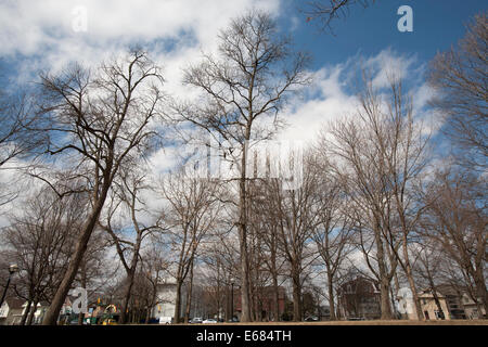 Effects of winter onto trees in Michigan, USA - Stock Image