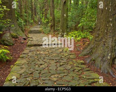 The Daimonzaka steps to Kumano Nachi Taisha Grand Shrine, on Kumano Kodo Pilgrimage Trail, Kii Peninsula, Wakayama, - Stock Image