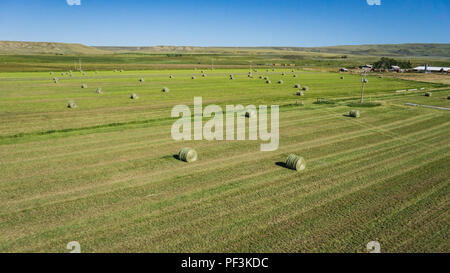Green harvest hay lies out in the field of an American farm. - Stock Image