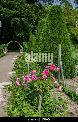 Garden with Roses Chenonceau Castle Loire Valley France - Stock Image