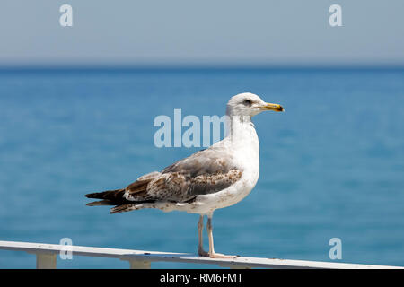 A seagull stands on the railing and observes the waters of the Baltic Sea in the vicinity of the beach in Kolobrzeg, Poland. - Stock Image