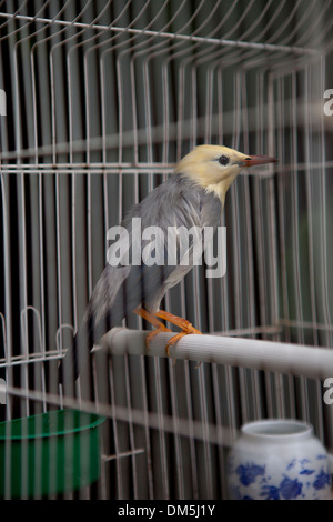 bird in cage - Stock Image