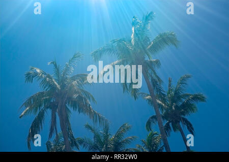 Palm trees against a blue sky with sun flare. - Stock Image