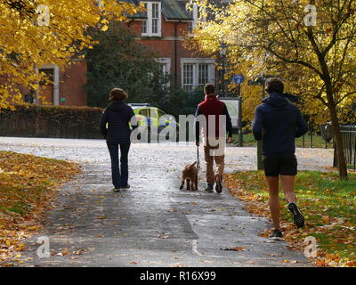 Jogger and dog walkers in Hyde Park. London enjoying the November afternoon sunshine - Stock Image