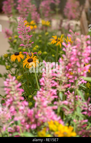 Variety of summer flowers displayed at garden center - Stock Image