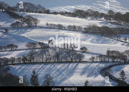 Paxton's Tower. UK. 11th December, 2017. Stark trees in a snowy landscape. Western Brecon Beacons National Park, - Stock Image