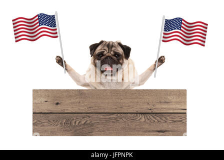 pug puppy dog with American National flag of USA and wooden board sign, isolated on white background - Stock Image