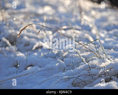 Cumbria, UK. 25th November, 2017. twinkling grass in snowy field as winter starts early in Cumbria Credit: Steve - Stock Image