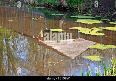 A reflection of a shed in a village pond at Halvergate, Norfolk, England, United Kingdom, Europe. - Stock Image