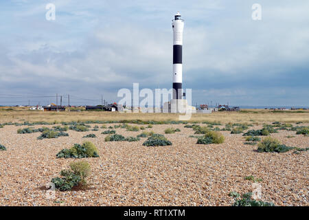 Dungeness is one of the largest expanses of shingle in Europe. Seen here are sea kale plants with the new Dungeness Lighthouse in the background. - Stock Image