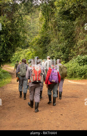 porters with backpacks following tourists, Bwindi Impenetrable Forest, Uganda, Africa - Stock Image