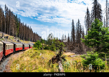 Old train wagons on a railroad in a forest with tall trees in a summer landscape - Stock Image