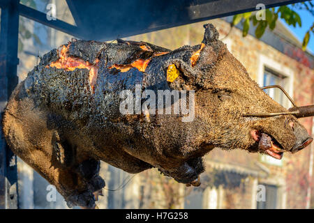 Wild Boar grilling on the spit - Stock Image