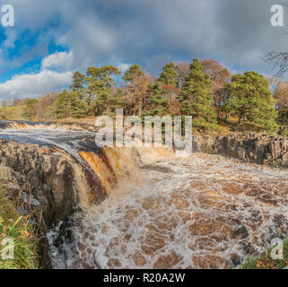 North Pennines AONB landscape, Low Force Waterfall  on a swollen river Tees in bright autumn sunshine from the Pennine Way - Stock Image