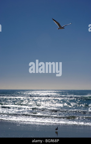 Sparkling ocean with a clear blue sky and seagulls - Stock Image