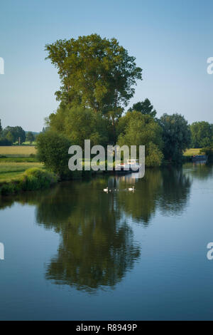 A family of swans cross the Thames by Wallingford Bridge, Oxfordshire - Stock Image