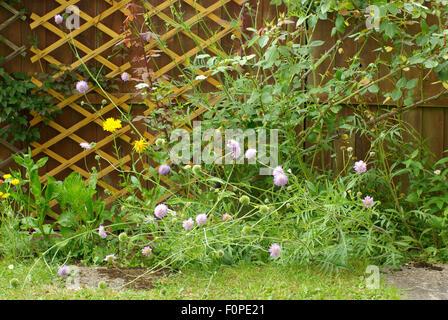 Border edge of an untidy garden - Stock Image