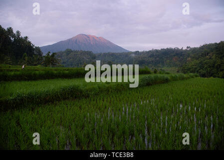 Rice fields near Mount Agung, Bali, Indonesia - Stock Image