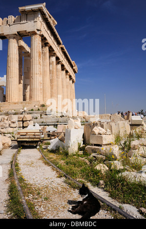 Feral cat basking in the sun outside the Acropolis. Athens - Stock Image