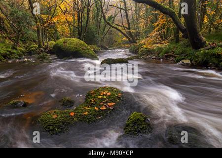 River Teign rushing through rocks between colourful autumn trees, Fingle Bridge, Dartmoor, Devon, England. Autumn (November) 2017. - Stock Image