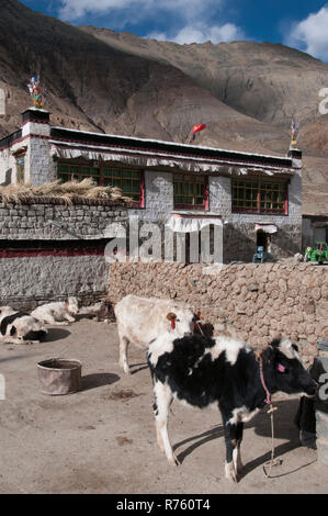 Village life in western Tibet, China - Stock Image