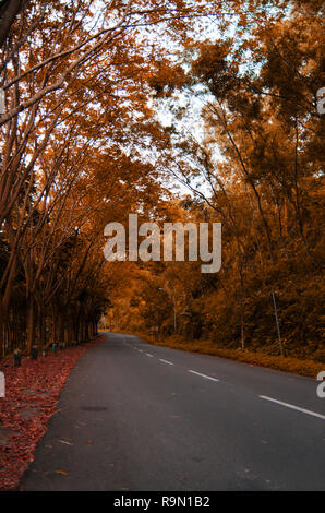 Road beyond the trees at autumn scene - Stock Image