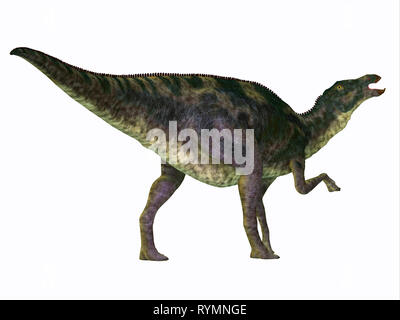 Maiasaurus Dinosaur Tail - Maiasaurus was a large herbivorous dinosaur that lived in Montana during the Cretaceous Period. - Stock Image