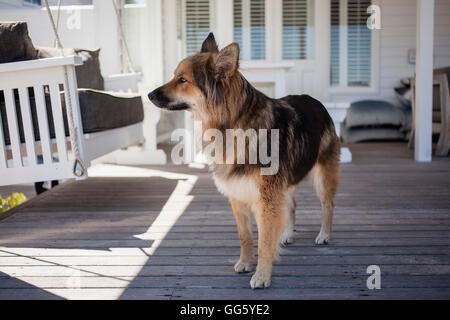 Dog standing on porch - Stock Image