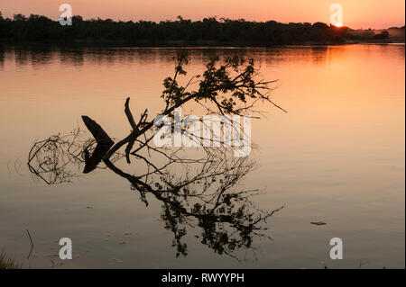 Mato Grosso State, Brazil. Sunset on the Xingu River with submerged trees. - Stock Image