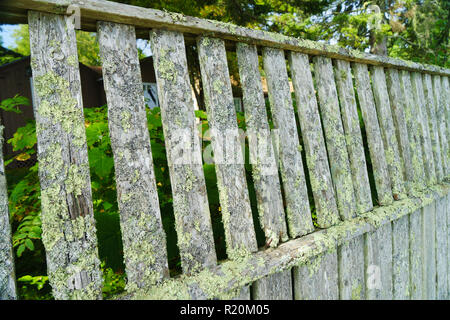 Old wooden fence covered with green moss, Bar Harbor, Maine, USA. - Stock Image