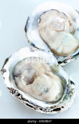 Fresh oysters for  appetizer . - Stock Image
