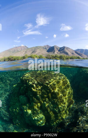 Split level view of Olowalu, Maui, Hawaii with coral and mountains. - Stock Image