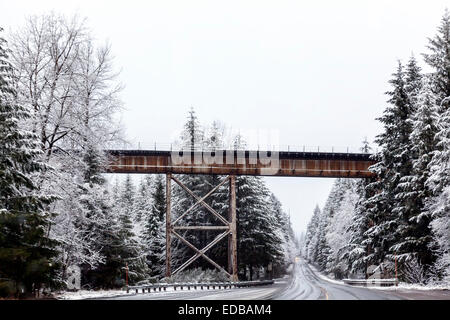 Railroad trestle crosses over road in the Deschutes, Three Sisters area of the Cascade Range in Oregon, USA. - Stock Image
