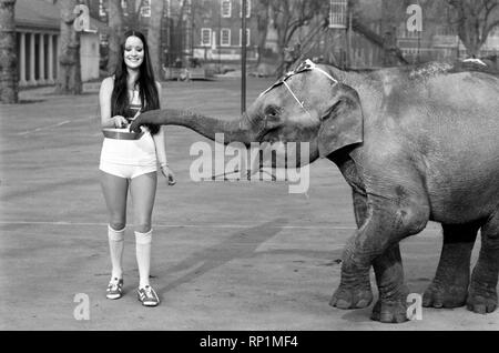 Strange tales of London. Beauty Queens (who will be in the pancake race on Tuesday) and baby elephant Minoti - she is five, but for an elephant that is a baby. February 1975 75-00776-007 - Stock Image