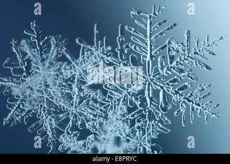Extreme close-up of snowflakes. - Stock Image