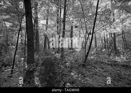Forest landscape Parc national du Fjord-du-Saguenay Quebec Canada - Stock Image