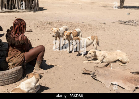 Africa, Namibia, Opuwo. Dogs waiting for lunch time scraps. Credit as: Wendy Kaveney / Jaynes Gallery / DanitaDelimont.com - Stock Image