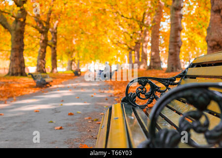 Autumn concept, benches on an avenue lined with trees in Green Park of London - Stock Image