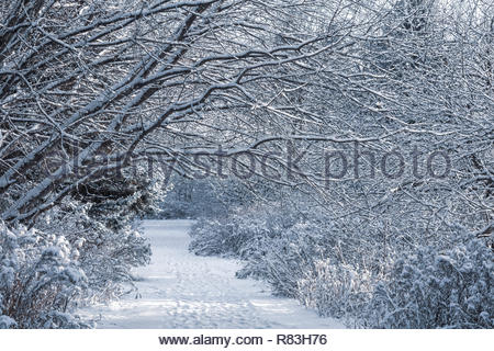 Winter wonderland on the waterfront trail at Lynde Shores Conservation Area in Whitby Ontario Canada - Stock Image