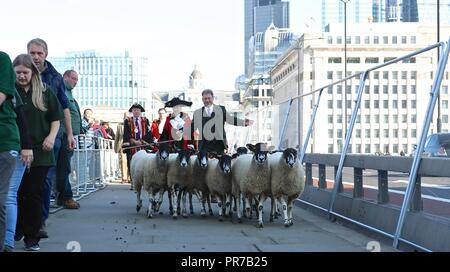 ALAN TITCHMARSH DRIVES SHEEP 2018 - Stock Image