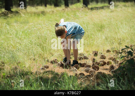 Boy bending over to pick up pine cone - Stock Image
