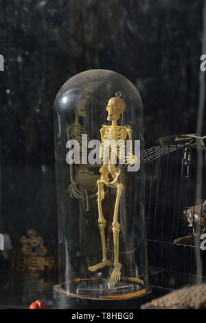 Human skeleton model on display in a secondhand shop, Hastings, East Sussex, England, UK - Stock Image