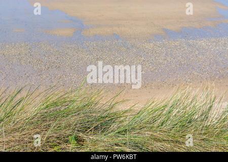 Seashore coastal grasses on cliff top above sandy beach. - Stock Image