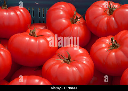 beef steak tomatoes close up, big red beef tomatoes on a market in bavaria - Stock Image
