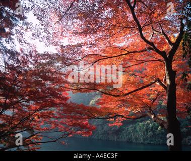 Autumn Foliage - Stock Image