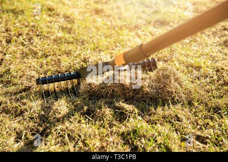 garden lawn aeration with scarifier rake - Stock Image