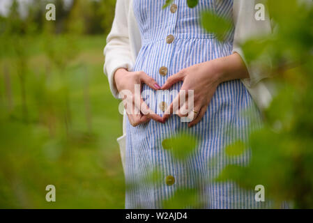 Selective focus photo. Woman holding hands as heart symbol on belly.  Lovely atmosphere. - Stock Image