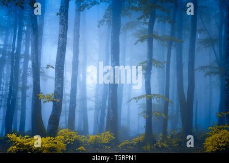 dark fantasy forest with blue fog - Stock Image